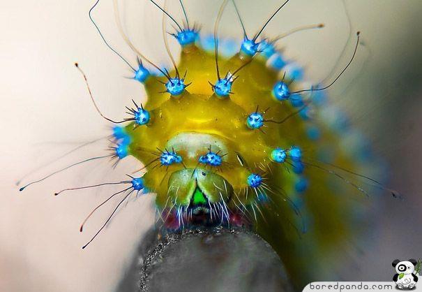 Electric caterpillar