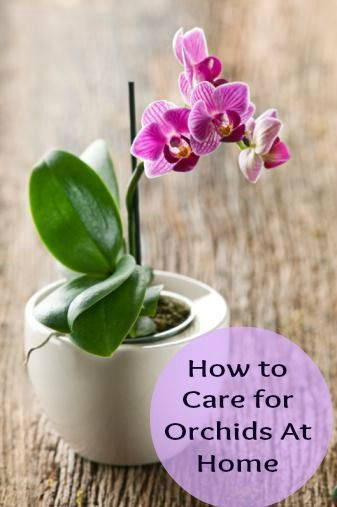 Potted Orchid Care And Maintenance
