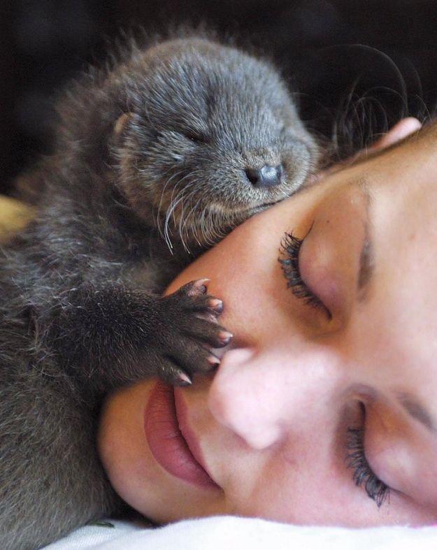 Otter pup cuddles - @Alicia T McGowan !!!!!!!