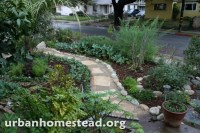 Edible front garden- so beautiful! | Front Yard Vegetable ...