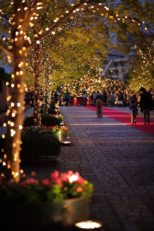 Christmas Walkway Lights