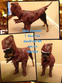 Chihuahua in a T-Rex costume | Festivus For The Rest Of Us ...
