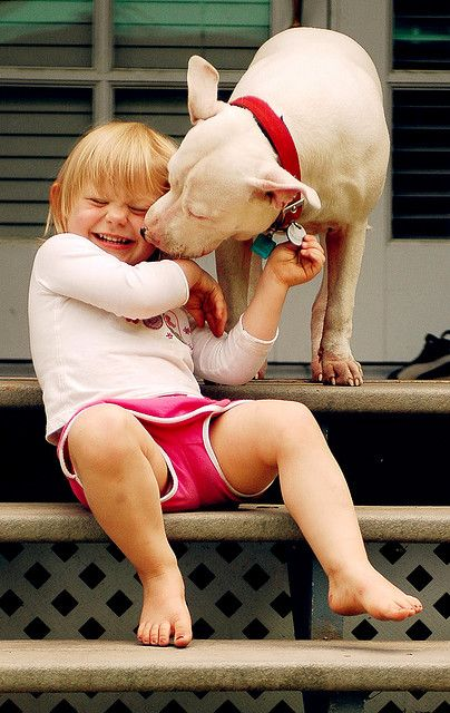 Oh I love this!!! Reminds me of Dymond Marie! They are such wonderful pets.... Hate the trainer & NOT the breed!!!