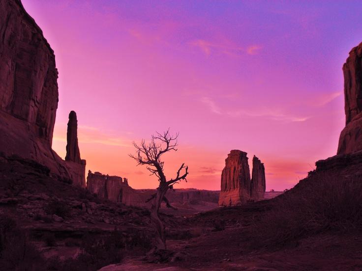 DESERT EVENING WALK.....    Photograph by Garth Rogers