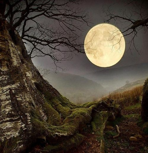 Forest Moon, Wales.