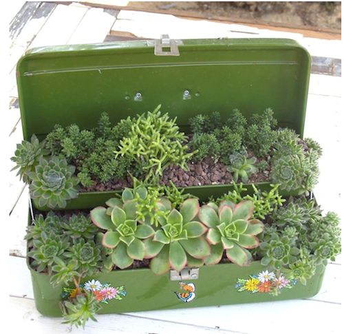 Re-purposing a vintage tackle box for a mini urban garden.