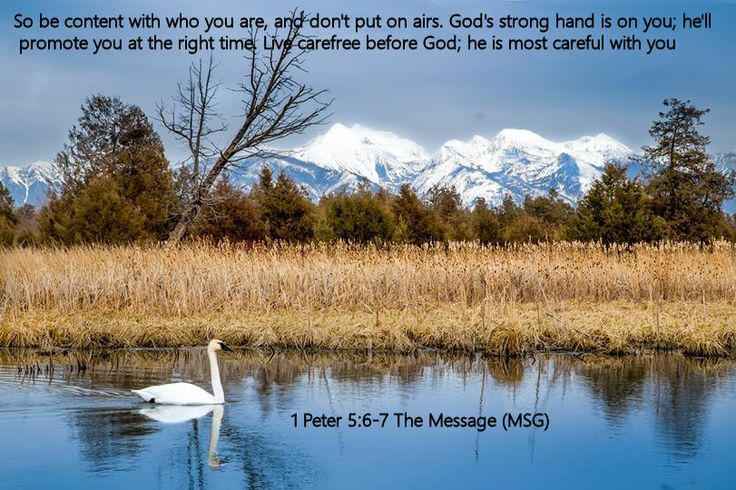 1 Peter 5.6-7 The Message (MSG)