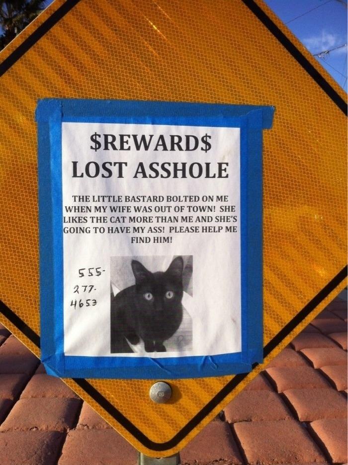 Lost cat sign Board 'O Random Pinterest