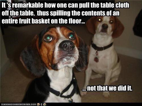 Pitbull Dog Love Quotes
