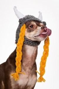 Chihuahua Viking   Chihuahuas in Costumes   Pinterest