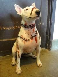 Frankenweenie dog costume | halloween | Pinterest