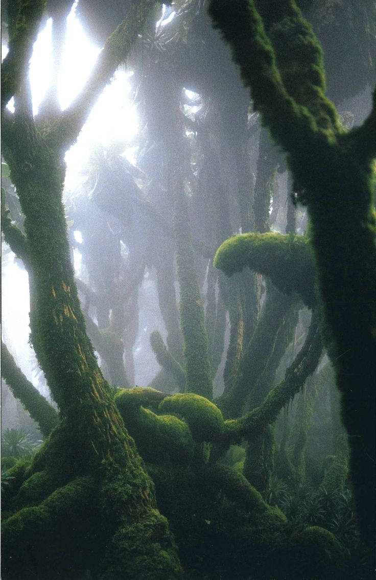 Fog Enshrouded Rain Forest in Rwanda's Virunga Mountains~ by Michael Nichols!