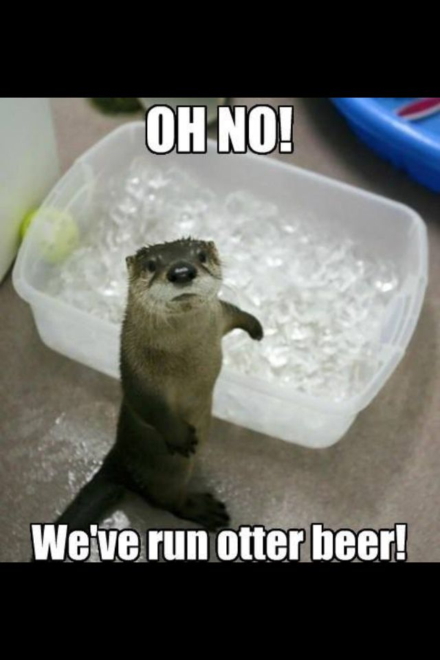 east coast chair and barstool inc pink comfy beer memes otter | meme me up scotty :p pinterest