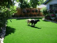 Custom Landscaping: Landscaping ideas for backyards with dogs