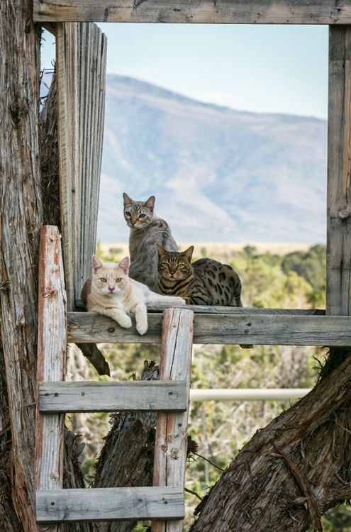 A Place in the Country / sweet and simple, loving the country life / cats on the farm
