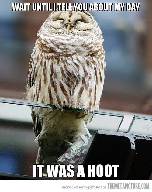 Delighted Owl