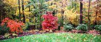 beautiful landscaping at woods edge   Gardening   Pinterest