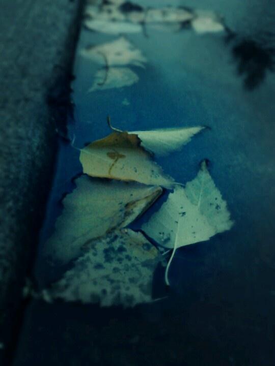 Leaves & water