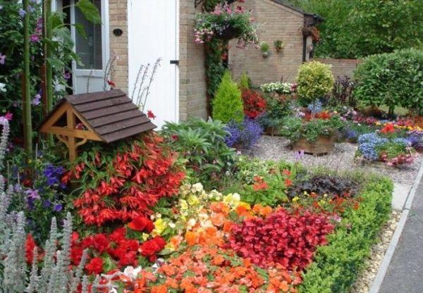 daisy mini garden ideas
