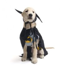 Superhero Dog Costumes | Barkers | Pinterest