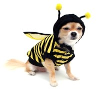 Dog / Cat Bumble Bee Costume...Adorable | Bees for Tina ...