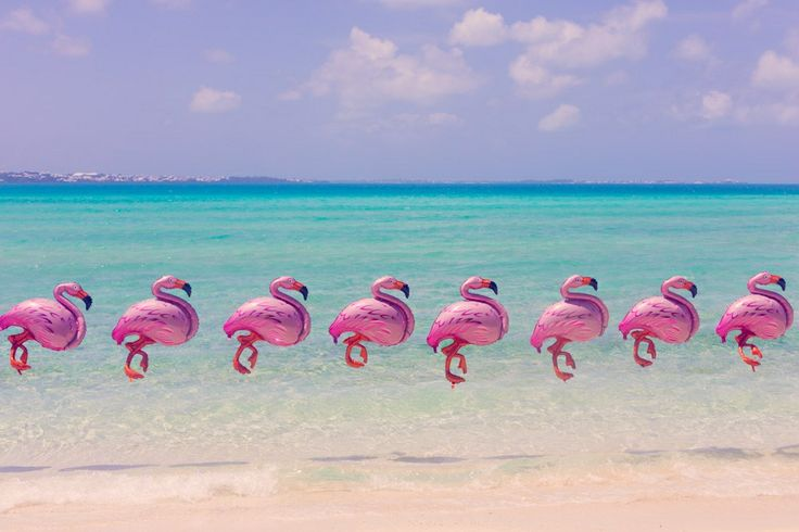 Bermuda Flamingos by Gray Malin