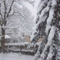 New jersey snow my roots new and old pinterest