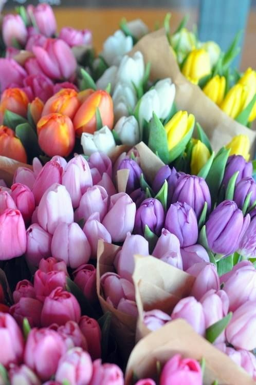 All flowers are beautiful, but I get excited about tulips for sentimental reasons and because it means spring has arrived!