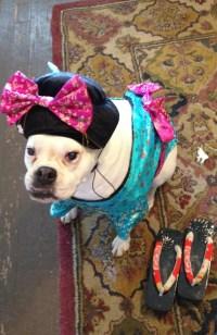 Boxer dog. Geisha girl Maggie. | Boxer dog. Costume ...