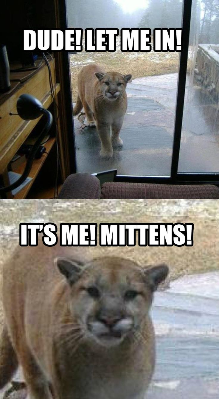 Kitty imposter