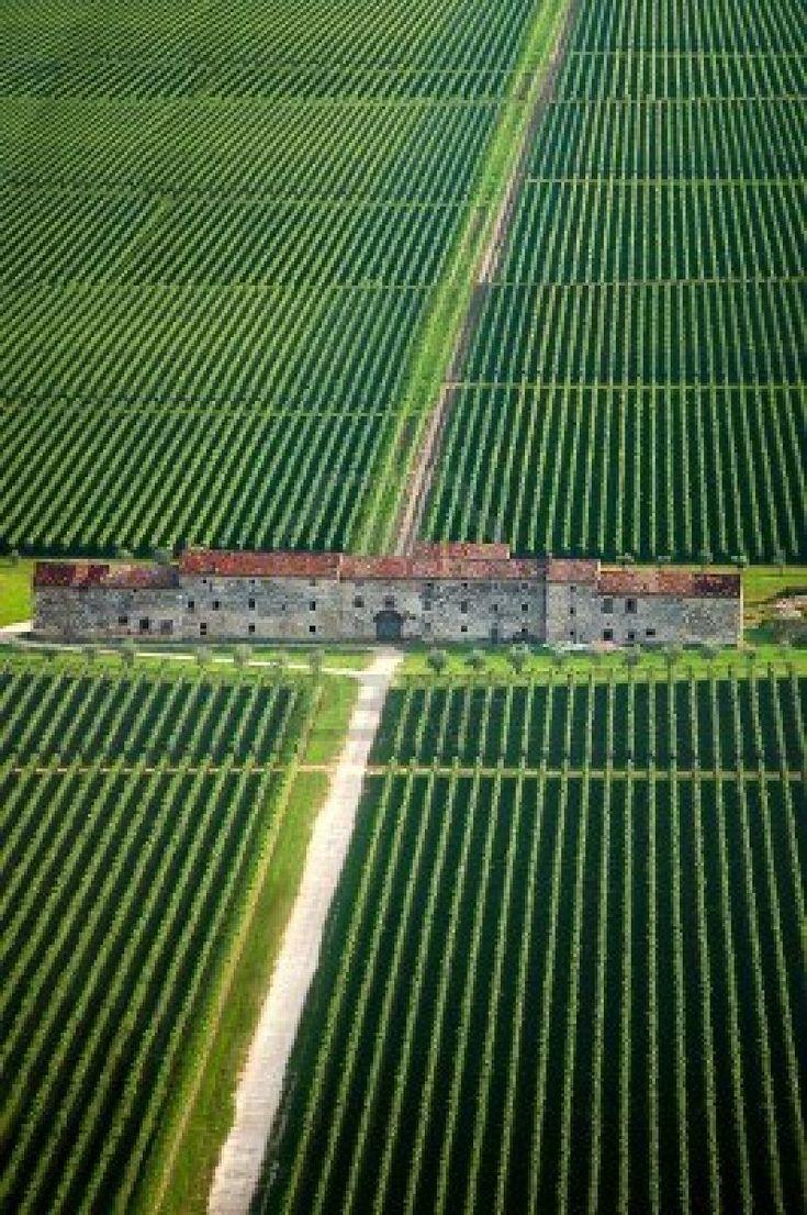 Campi di viti e vecchia casa contea in Veneto Italia Copyright: Alberto Masnovo