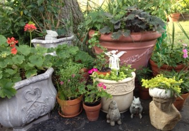 Ideas About Potted Plants On Pinterest Plants