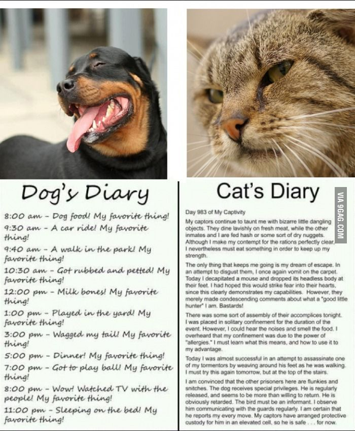 Cat and Dog diary...so true! Rupert Pinterest