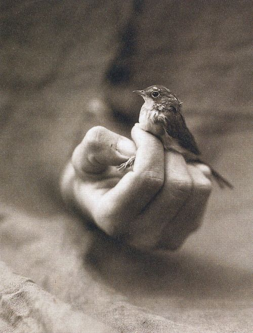 I love this photo, the strength of humanity and also our gentleness.  (photographer Victor Schrager)