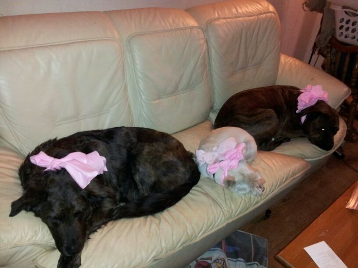 3 dogs all packaged for a nap