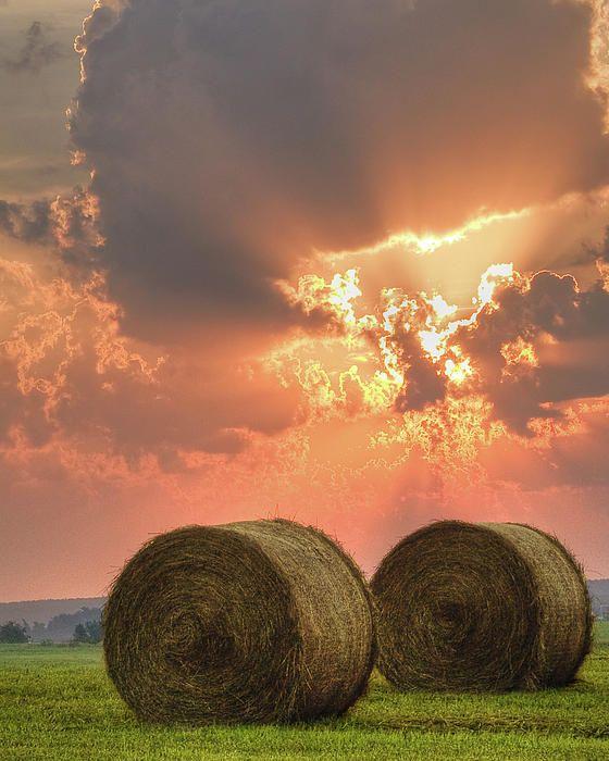 freshly baled hay