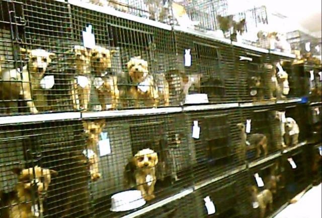 A look inside a puppy mill auction Pet Lover to Another