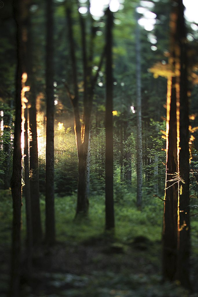 """""""the woods are lovely, dark and deep . . but I have miles to go before I sleep."""" - Robert frost . . . nature. the ultimate source of inspiration. {junk gypsy co}"""