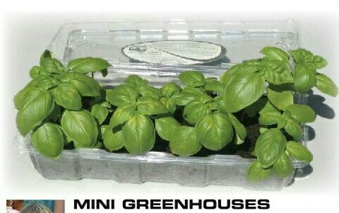Reusing produce containers | ecogreenlove