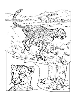 National Geographic Coloring Sheets Coloring Coloring Pages