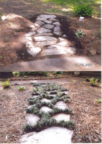 The gallery for --> Mondo Grass Pavers