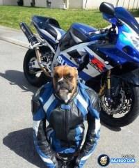 Funny Dog in Biker Costume | Pets!!! | Pinterest