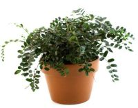 Keeping Your Pets Safe: 10 Non-Toxic House Plants  ASPCA