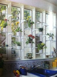 Orchids on Pinterest | Window Shelves, Glass Shelves and ...