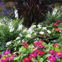 Beautiful Flower Garden | Scenery | Pinterest