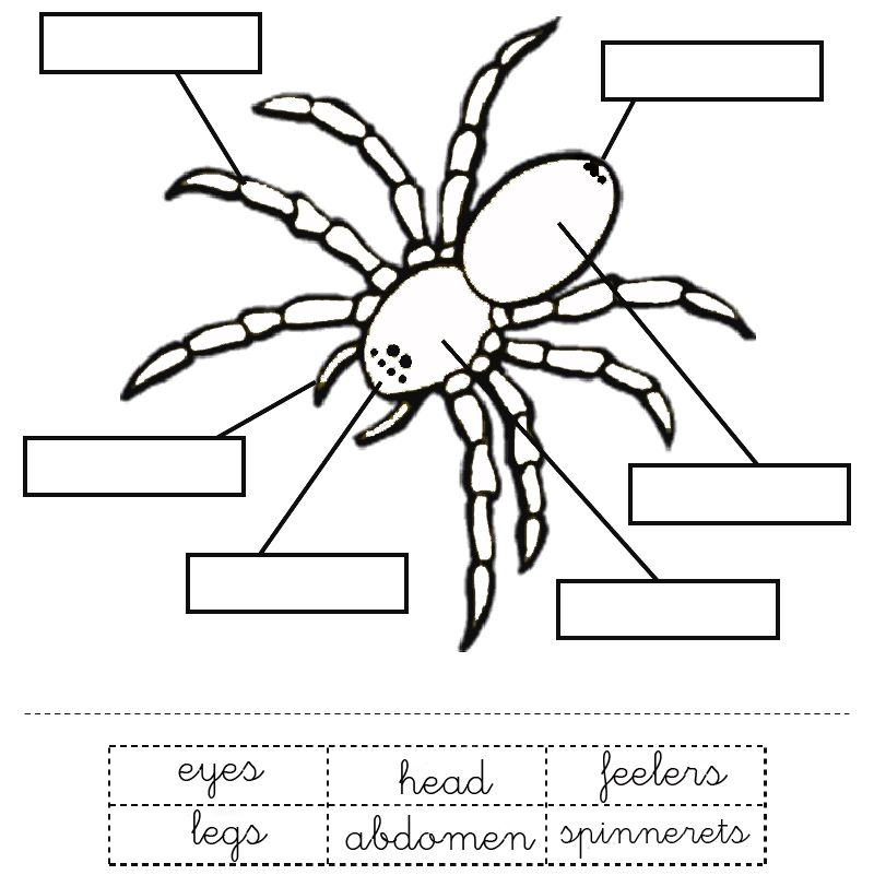 Spider Unit Study for Preschool (FREE printables and