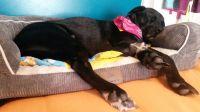 Pin by R2P Pet on Stuft Pet Beds | Pinterest