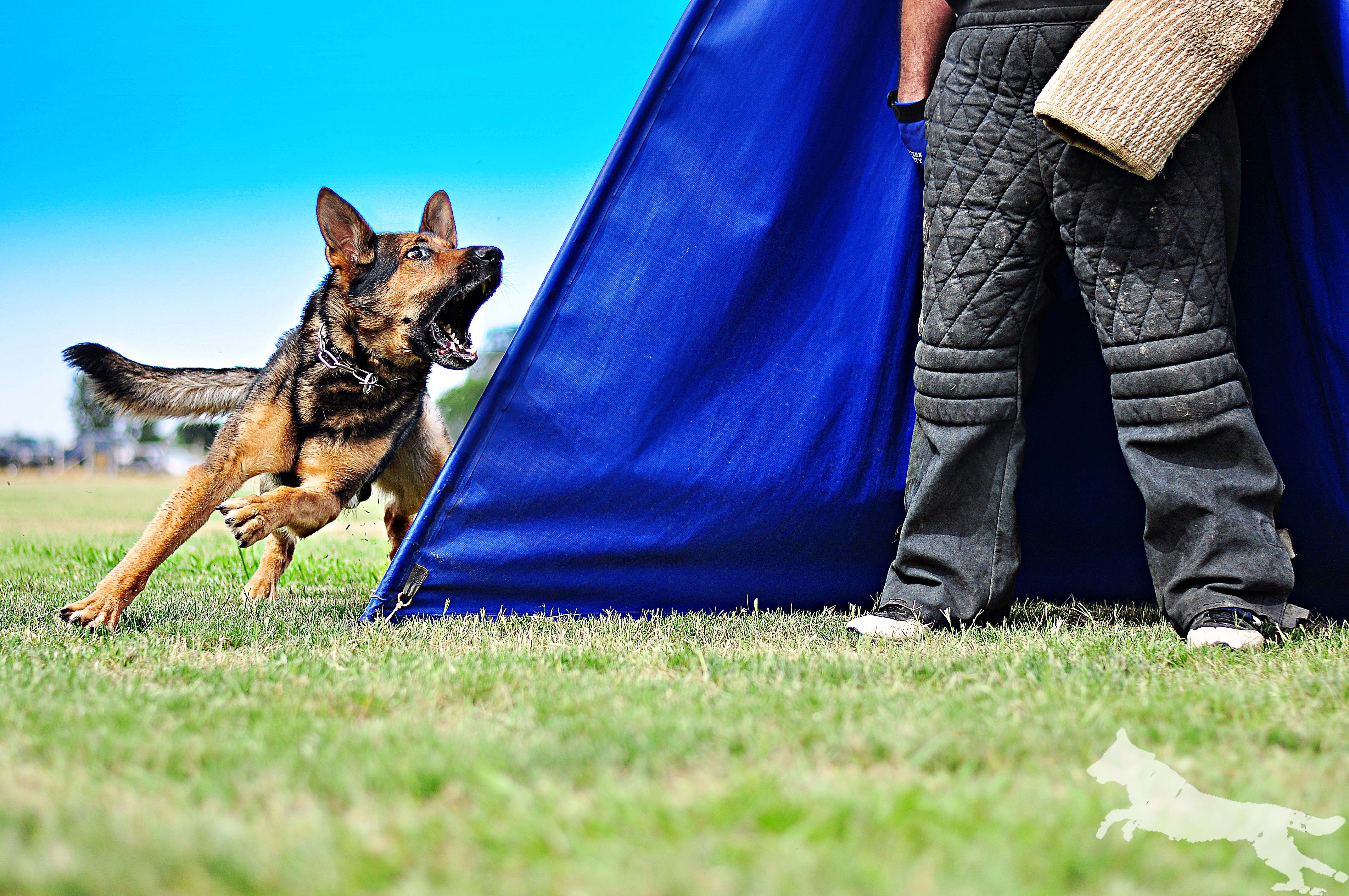 Pin by Beth McDougald on Schutzhund GSD/Working and