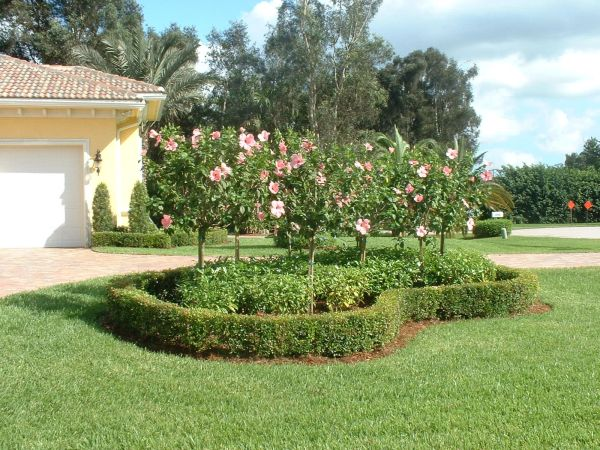 florida landscaping backyard