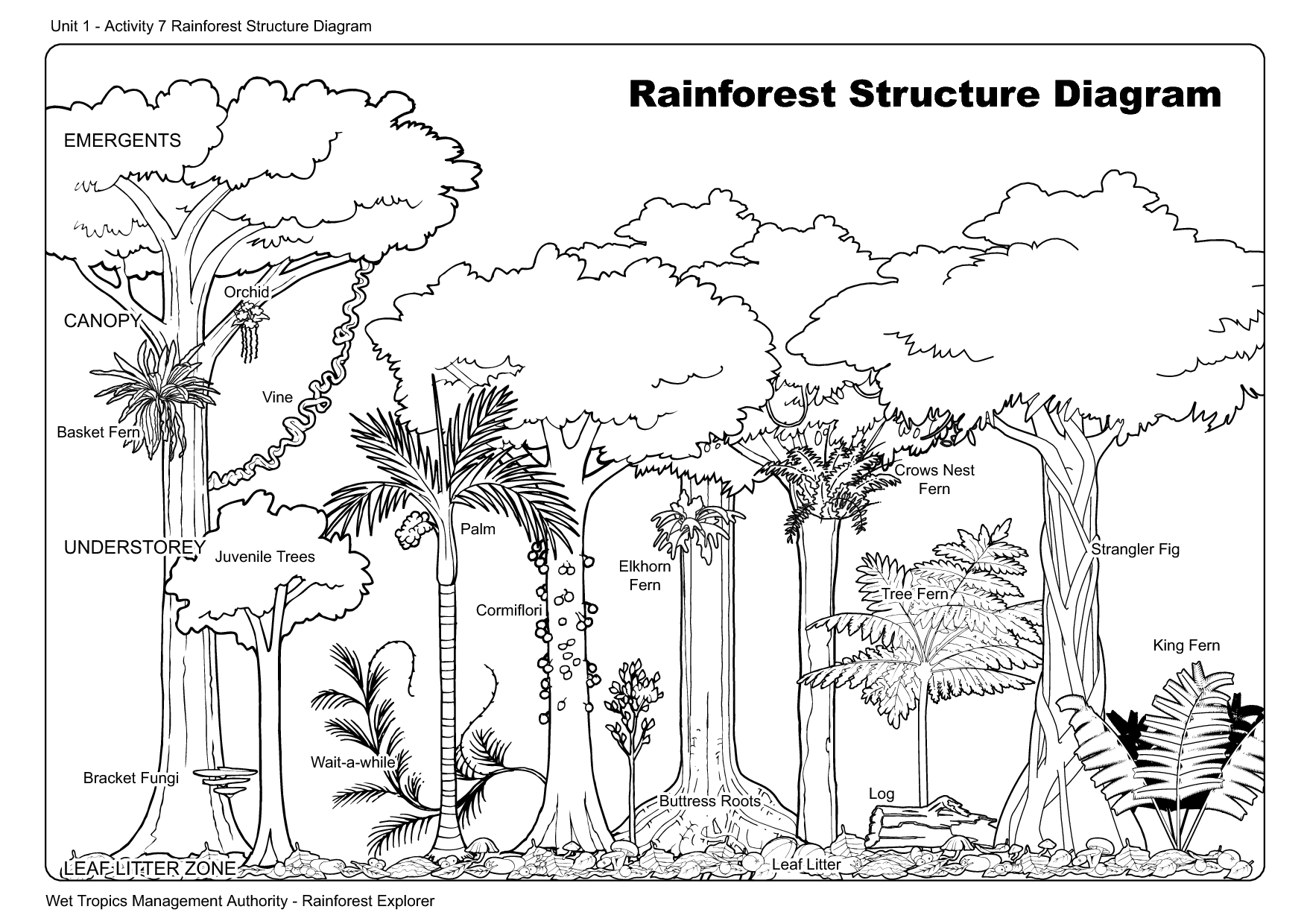 Rainforest Layer Diagram